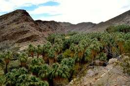 West Fork Trail and Palm Canyon (14)