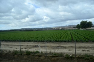 Wow! Farmland not yet plowed under.