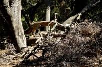 Hiking Oak Canyon Nature Center (17)