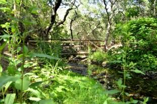 Hiking Oak Canyon Nature Center (21)