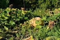 It's the Great Pumpkin (3)