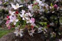 Descanso Gardens in March, part 1 (3)