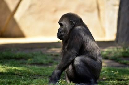 san-diego-zoo-safari-park-12