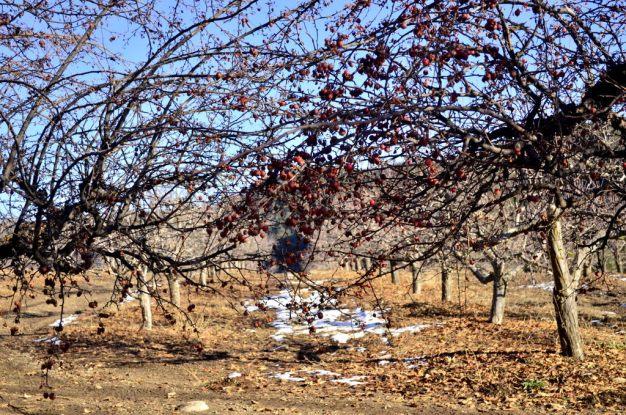 oak-glen-with-snow-part-2-9
