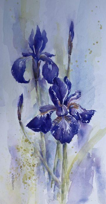 Irresistible Iris SOLD