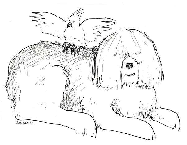 SheepdogAndBird72
