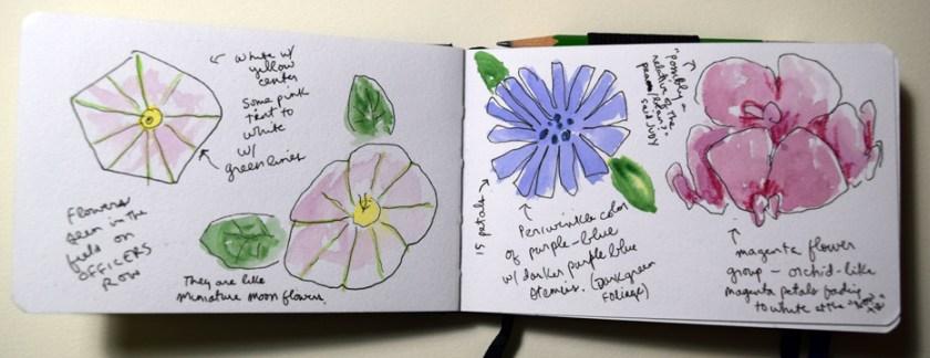 wildflowers72