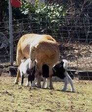 Mama&babies