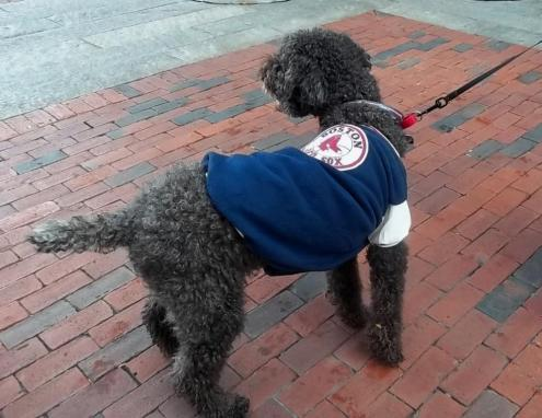 One Dog Celebrating the Red Sox Win