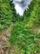 Trail Aufstieg zum Griesberg ... Zecken sammeln