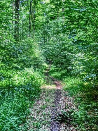 Was für ein toller Trail