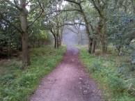 Woodland walk near our home