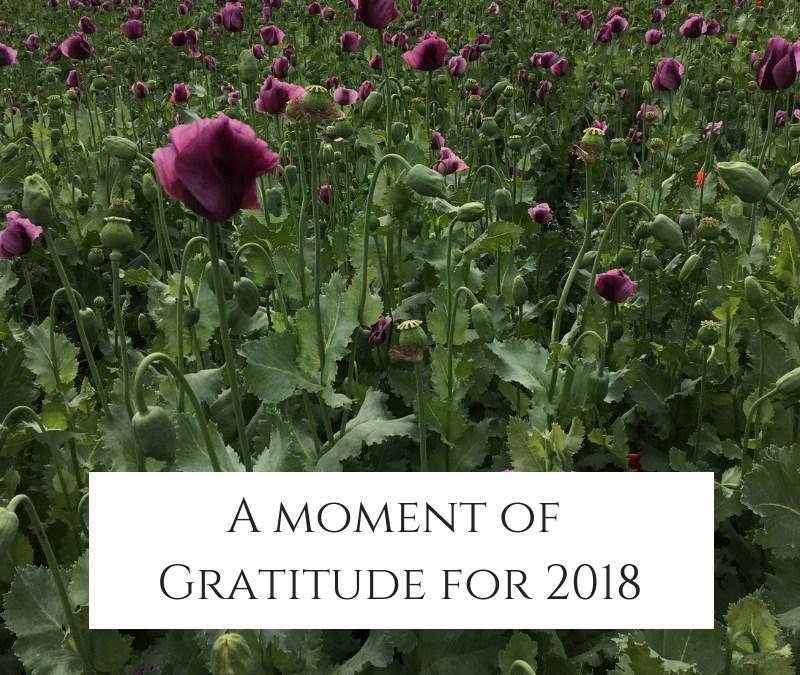 Gratitude For 2018