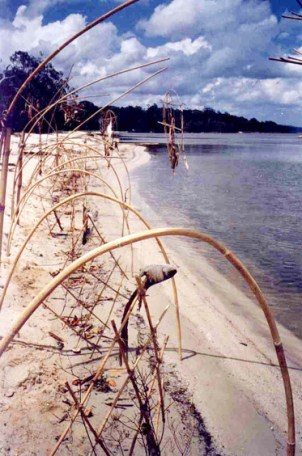 Floating Land Project, Boreen Point, Noosa, Qld, 2001