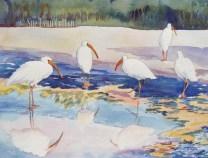 Ibis Reflections $88
