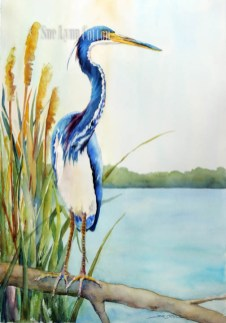 Little Blue Heron on the Reeds $110
