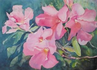 Pink Mandeville $99