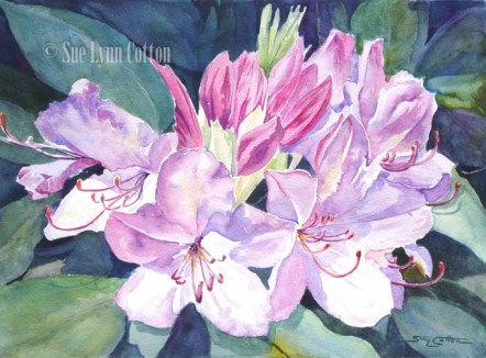 Purple Rhododendrum $99