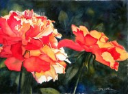Red Roses in Sunlight $88