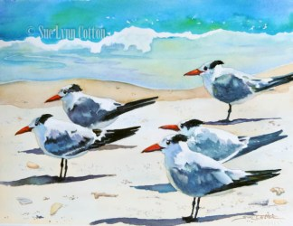 Sandwich Terns $99