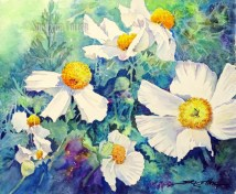 White Poppies in the Wild $99