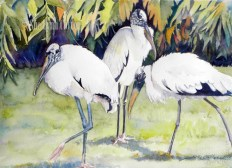 Woodstorks by the Palms $99
