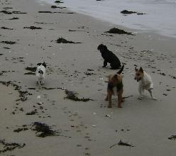 dogs_on_beach