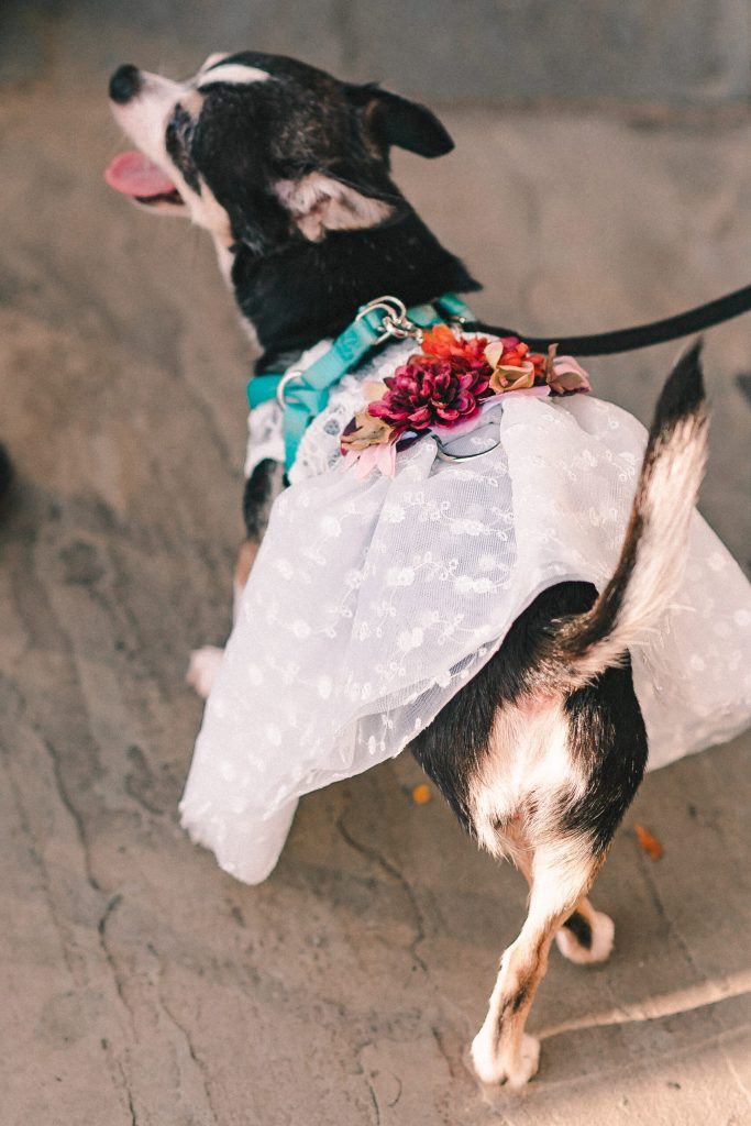 wedding-dress-for-dog-suessmoments