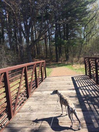 Bella on the bridge1