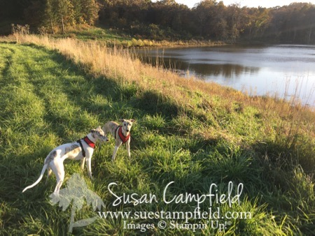 At the tree farm with whippet pups - 1