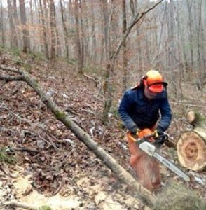 Jim uses a Stihl chainsaw