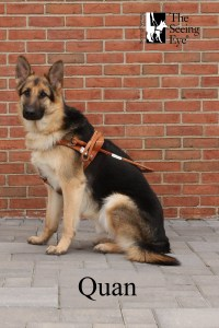 A formal shot of Quan in harness