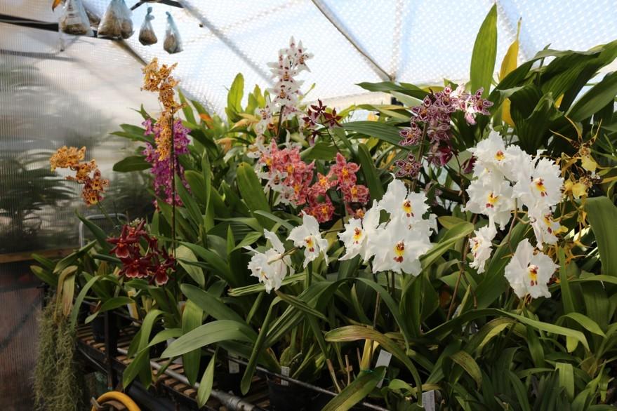 view inside my intermediate greenhouse ( min.12 c.)