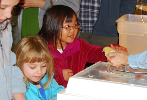 Many youngsters in attendance at Saturday's Talmage Farm Agway Chick Day wanted to pet the furry little friends.
