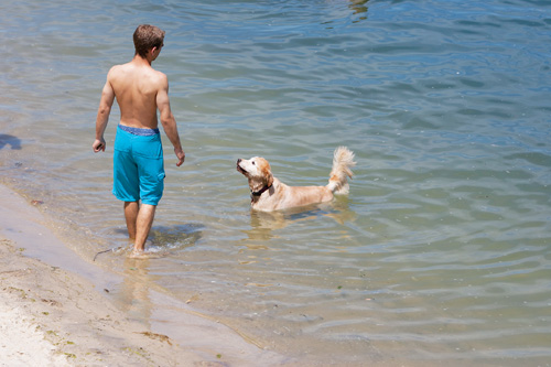 KATHARINE SCHROEDER FILE PHOTO | The town may soon have a say on dogs on the beach, such as this one taking a dip at Goose Creek in Southold.