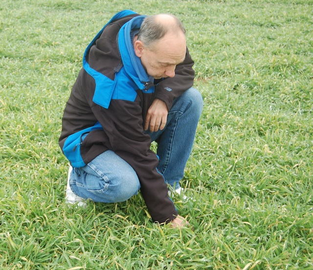 Brian Zimmerman inspects his barley crop on Twomey Avenue in Riverhead. (Credit: Cyndi Murray)