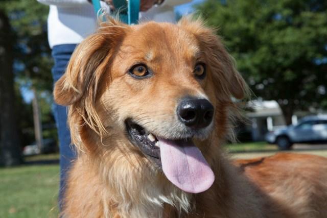 Cody, age 1, of Laurel.