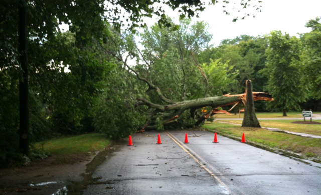 tree down peconic lane