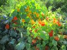 garden7