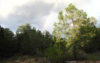rainbow over woods
