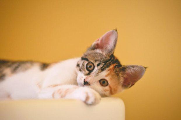 Pilihan Nama Kucing Jantan Dan Betina Yang Bagus Beserta Artinya