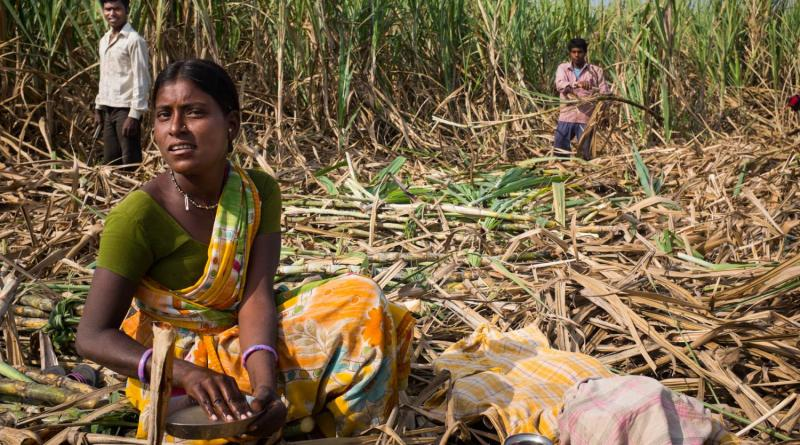 Global Opposition to India's Sugar Subsidies