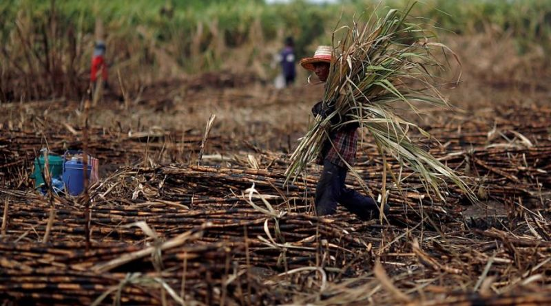 Thailand Forecasts Record-High Cane, Refined Sugar Output in 2017/18