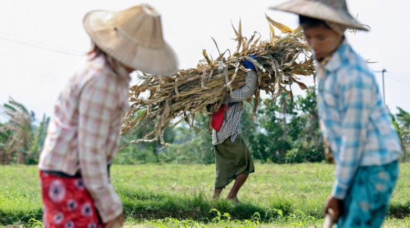 Myanmar Sugar Development Co to Invest US$20 Million for a New Sugar Mill