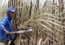 Higher Sugarcane Crop in India & Brazil to Hurt Sugar Companies For Some Time Now