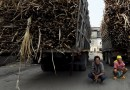 Rise Sugar Industry to overhaul the Sugar System of Thailand