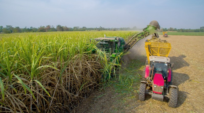 Mitr Phol Pioneers AI to Modernize Thai Sugar Industry