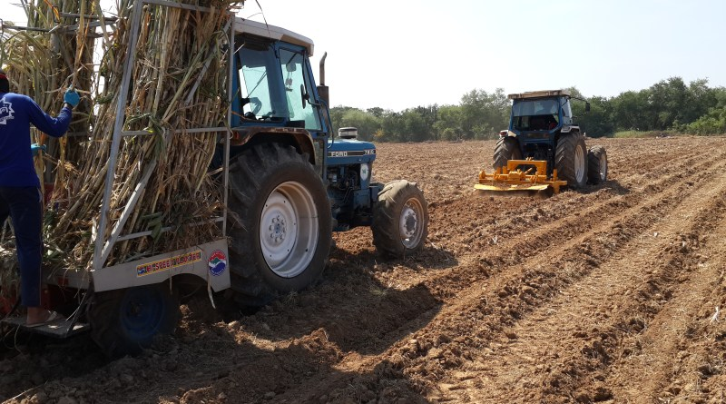 Survival of Sugarcane Farm Owners from Low Price of World Sugar