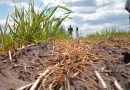 Challenges Time of Thailand's Cane and Sugar Industries in 2020