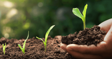 Planting The Seed of Change